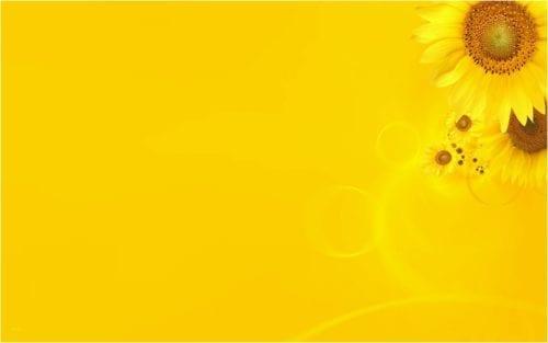 خلفية صفراء