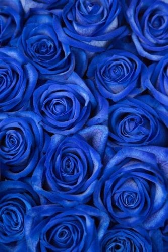 خلفيات زرقاء